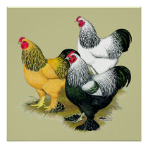 Brahmas Three Roosters Poster