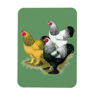 Brahmas Three Roosters Flexible Magnets