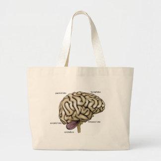 Brain anatomy labelled diagram bag