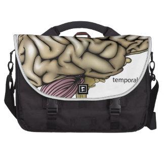 Brain anatomy labelled diagram laptop bags
