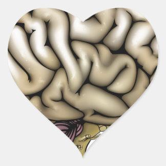 Brain anatomy labelled diagram heart sticker
