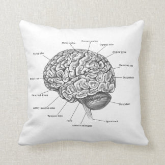 Brain Anatomy Throw Pillow