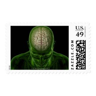 Brain Arteries Postage Stamp