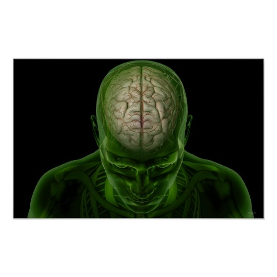 Brain Arteries Poster