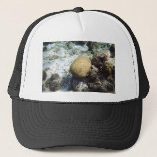 Brain Coral Trucker Hat
