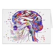 Brain cranial nerves, brain cranial nerves