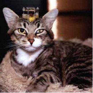 brain damaged cat sculpture