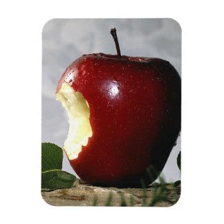Brain Food  Photograph Premium Magnet