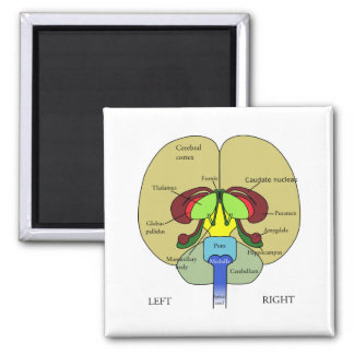 Brain - Labeled Refrigerator Magnets