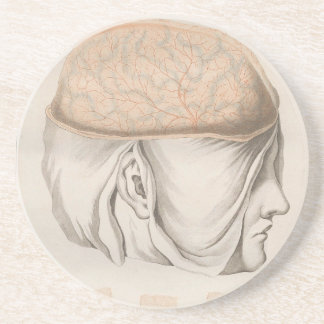 Brain One - Neuroanatomy Coaster