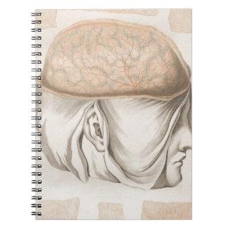 Brain One - Neuroanatomy Notebook