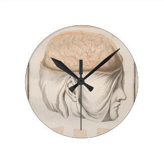 Brain One - Neuroanatomy Round Clock