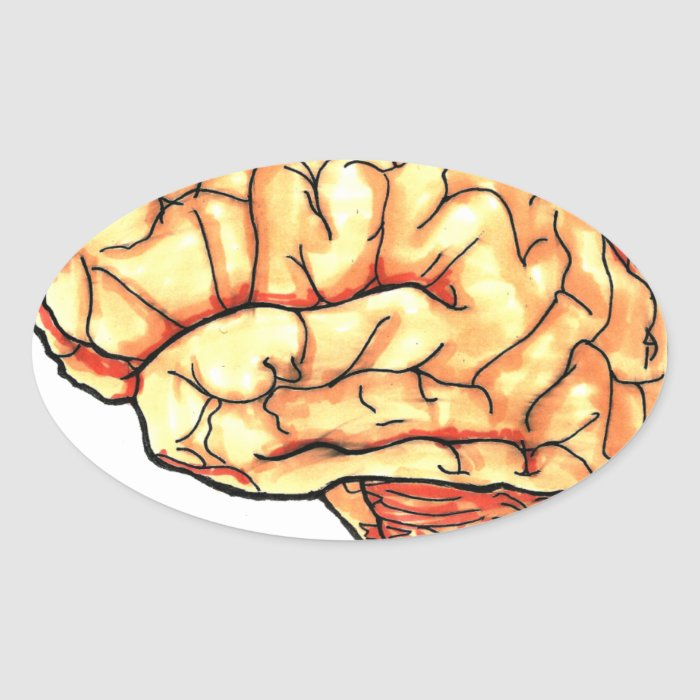 Brain series oval sticker