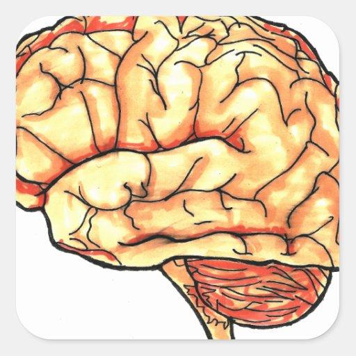 Brain series square sticker