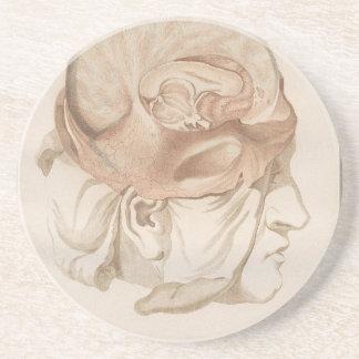 Brain Two - Neuroanatomy Sandstone Coaster
