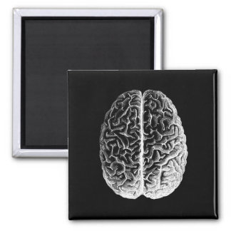 Brains! Magnet