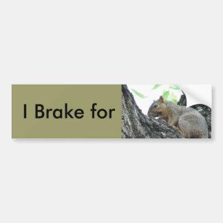 Brake for Squirrels Bumper Sticker