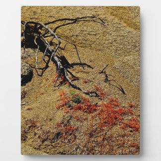 BRANCH AND RED SPRING FLOWERS IN THE DESERT DISPLAY PLAQUE