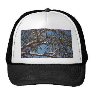 Branch Trucker Hat