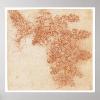 Branch of a Blackberry, Leonardo Da Vinci Print