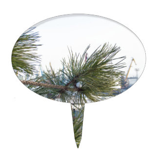 Branch of a pine on blurred background industrial cake topper
