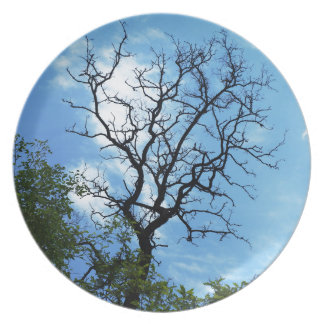 branch of acacia dinner plate