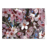 Branch of Pink Blossoms Spring Flowering Tree Card