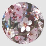 Branch of Pink Blossoms Spring Flowering Tree Classic Round Sticker