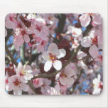 Branch of Pink Blossoms Spring Flowering Tree Mouse Pad
