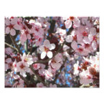 Branch of Pink Blossoms Spring Flowering Tree Photo Print