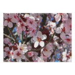 Branch of Pink Blossoms Spring Flowering Tree Poster