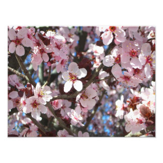 Branch of Pink Blossoms Spring Flowers Photo Print