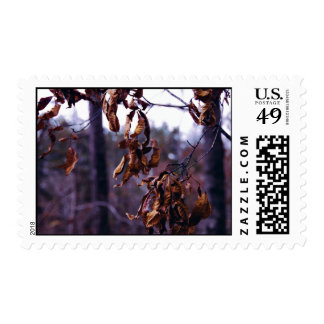 Branch Themed, A Bunch Of Dry Leaves Still Hanging Postage Stamps