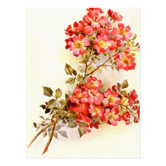 Branch with rose flowers custom postcard