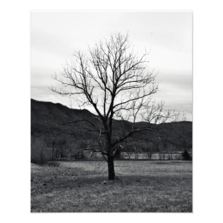 Branches 16x20 Photo
