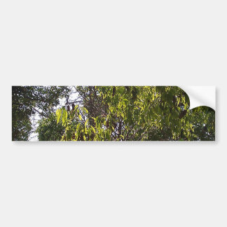 Branches and leaves of a lush green tree bumper sticker