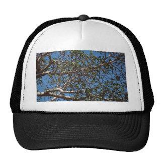 Branches Trucker Hat