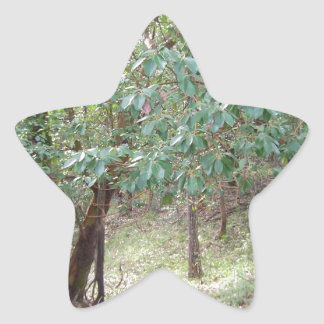 Branches in the Forest Star Sticker