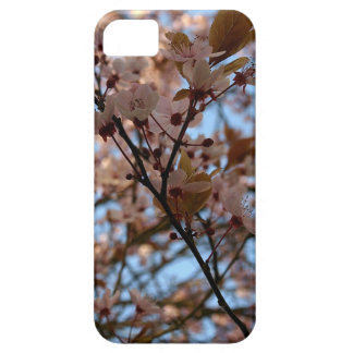 Branches in the sun iPhone SE/5/5s case