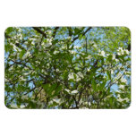 Branches of Dogwood Blossoms Magnet