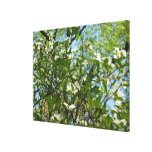 Branches of Dogwood Blossoms Spring Trees Canvas Print