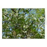 Branches of Dogwood Blossoms Spring Trees Card