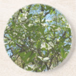 Branches of Dogwood Blossoms Spring Trees Coaster