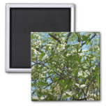 Branches of Dogwood Blossoms Spring Trees Magnet