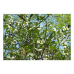Branches of Dogwood Blossoms Spring Trees Photo Print