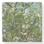 Branches of Dogwood Blossoms Spring Trees Stone Coaster