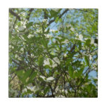 Branches of Dogwood Blossoms Spring Trees Tile