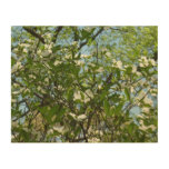 Branches of Dogwood Blossoms Spring Trees Wood Wall Decor