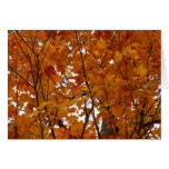 Branches of Maple Leaves I Orange Autumn Card