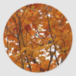 Branches of Maple Leaves I Orange Autumn Classic Round Sticker